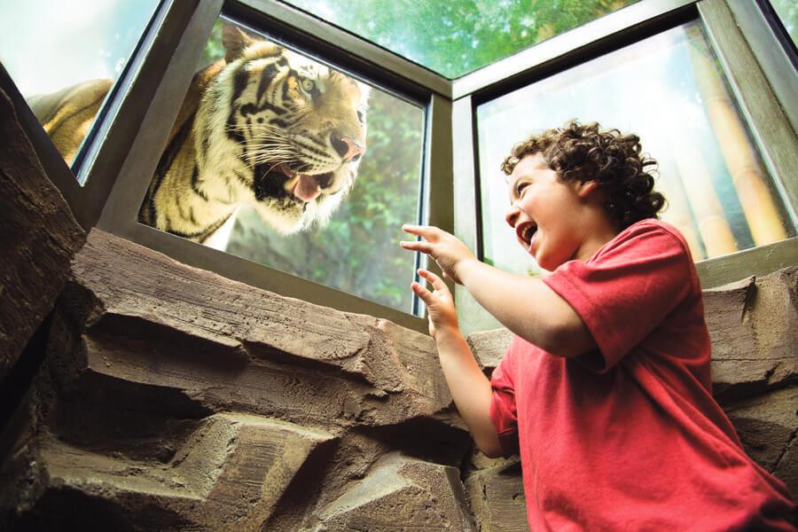 Busch gardens tampa discount tickets seaworld orlando parks - Busch gardens discount tickets aaa ...