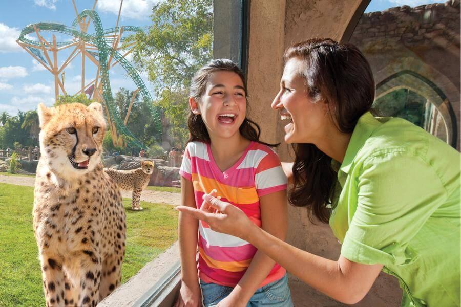 Busch gardens tampa discount tickets seaworld orlando parks for Busch gardens tampa florida resident