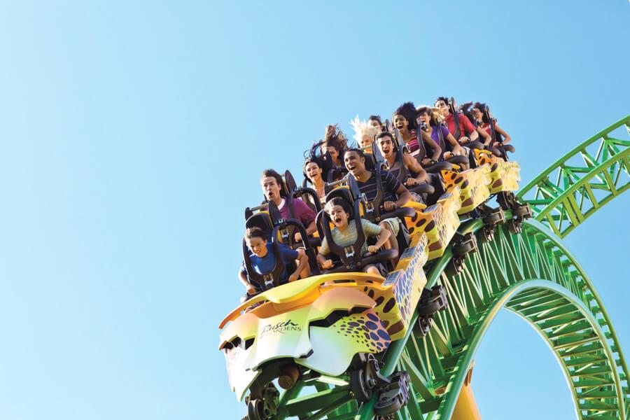 Cheetah Hunt Busch Gardens Tampa Discount Tickets Undercover Tourist