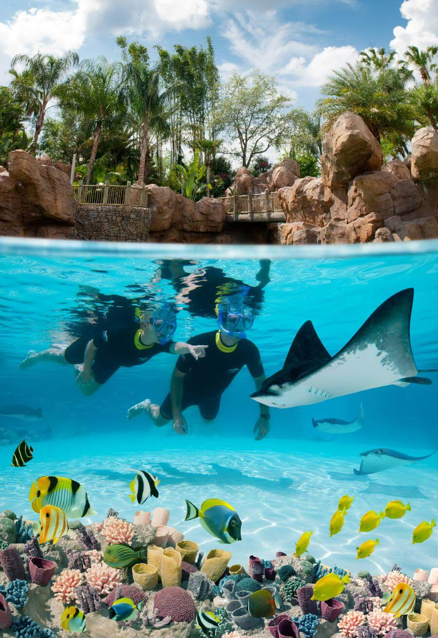 Discovery Cove Seaworld Waterpark Discount Tickets Undercover Tourist