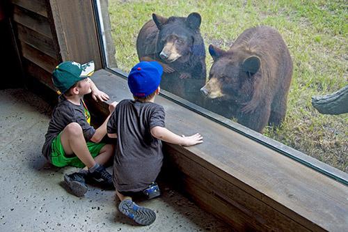 Miami zoo bear viewing