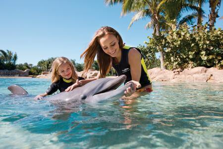 Orlando swim with dolphins at SeaWorld